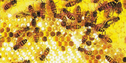 Environnement : les ruchers supprimés des zones Natura 2000