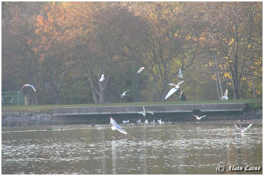 Le vol des mouettes - Parc des Gayeulles - Rennes