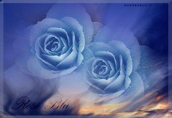 rose_blu.jpg