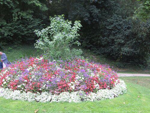 Massif fleuri
