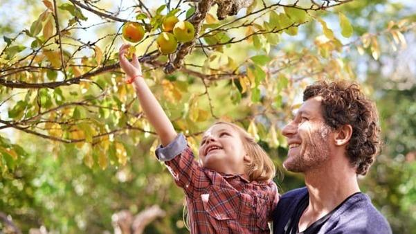Leçon: Bon et mauvais fruit (Luc 6: 43-45)
