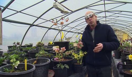 Jardin Jardinier : L'hybridation des hellébores