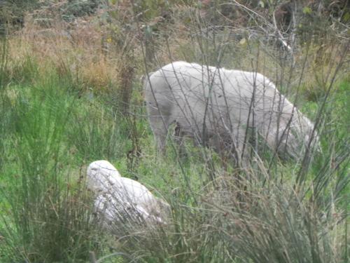 Parc Animalier  du Menez Meur