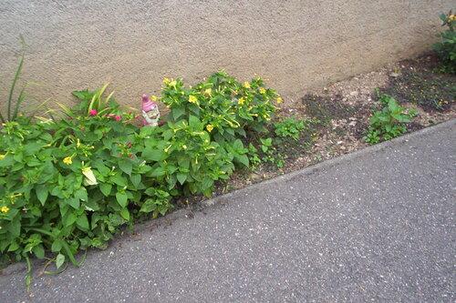 Mon jardin, mes fleurs