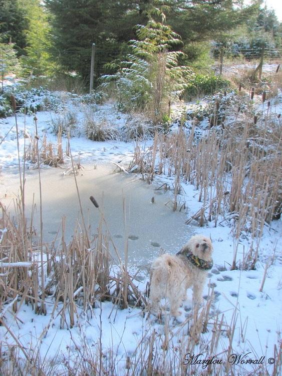 Nouvelles du Canada 165 : Un jour de neige