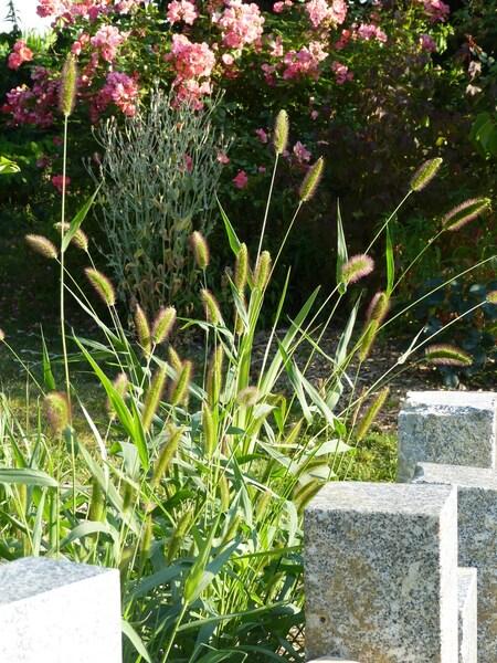 Les graines du sol s'éveillent ...