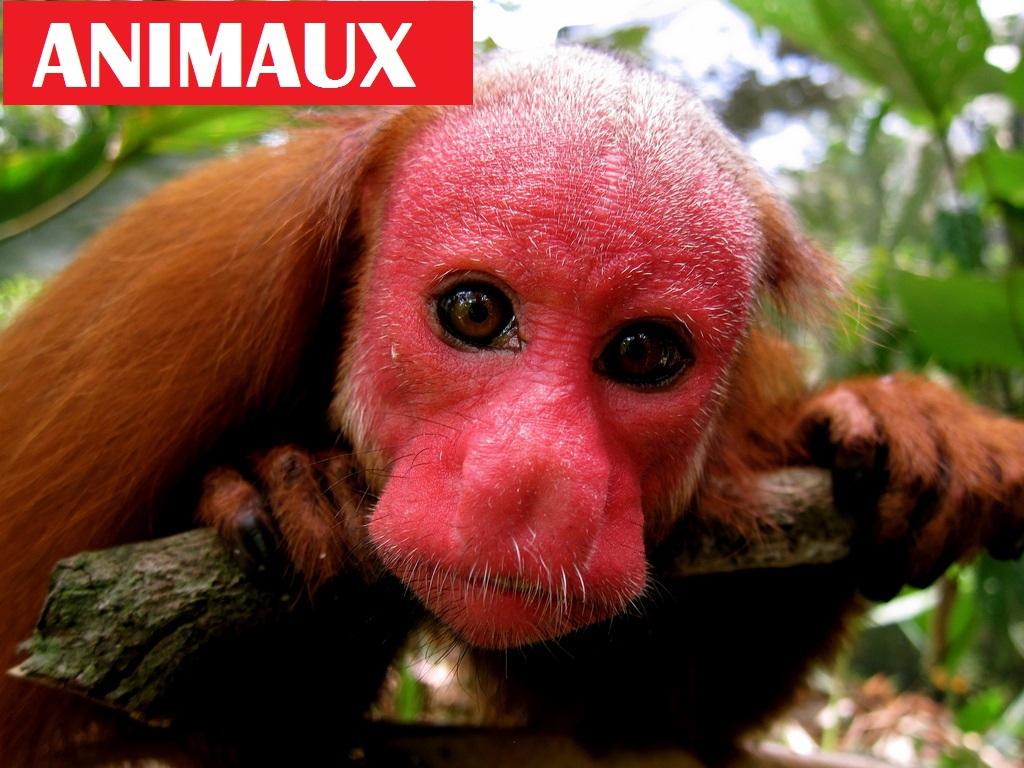 Les 10 animaux les plus effrayants au monde