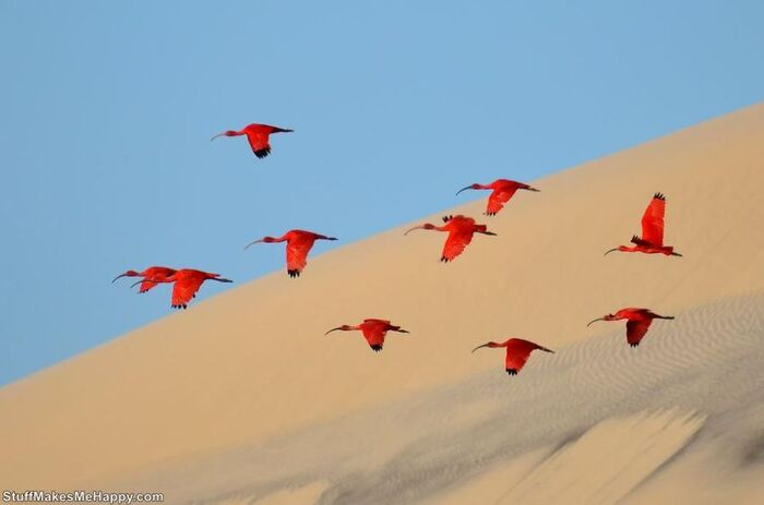 Meilleures photographies de la faune par National Geographic Magazine