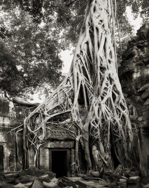 Elle a photographié les plus vieux arbres du monde