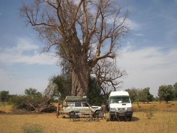 mali piste bamako ségou repas midi 2 à côté d'un baobab