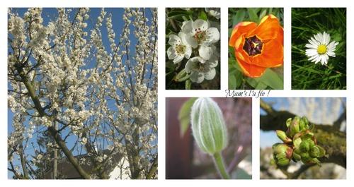 Le printemps est là !!