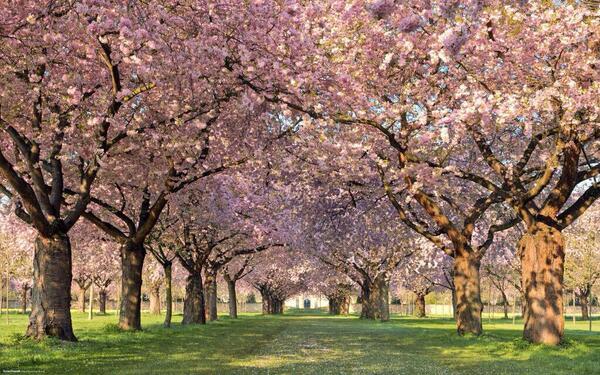 Le printemps habille ses arbres