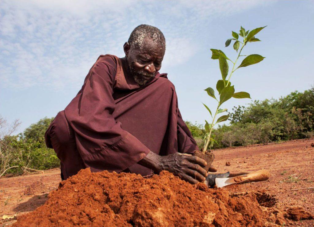YACOUBA SAWADOGO...L'Homme intègre qui plantait des arbres