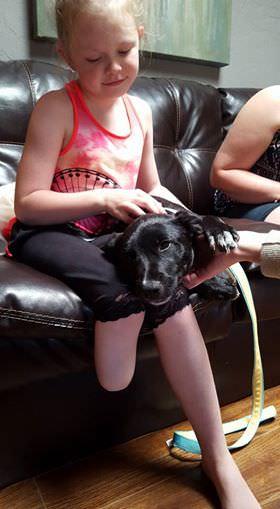 (-*♥*-) Une chienne et une fillette à qui il manque un membre reçoivent toutes deux des prothèses du même spécialiste.
