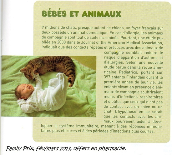 Allergie-chats-bb