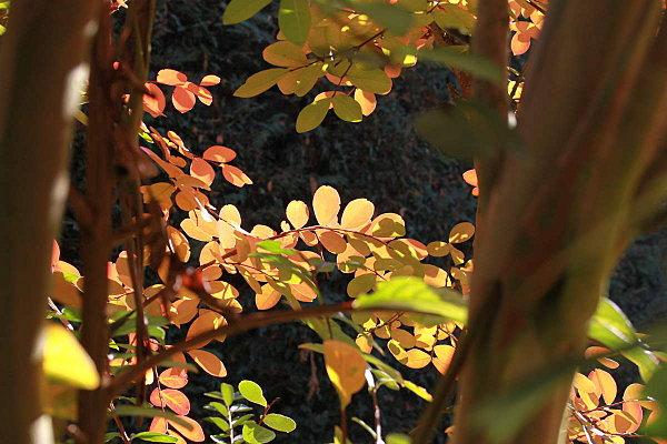 automne-2011 5668