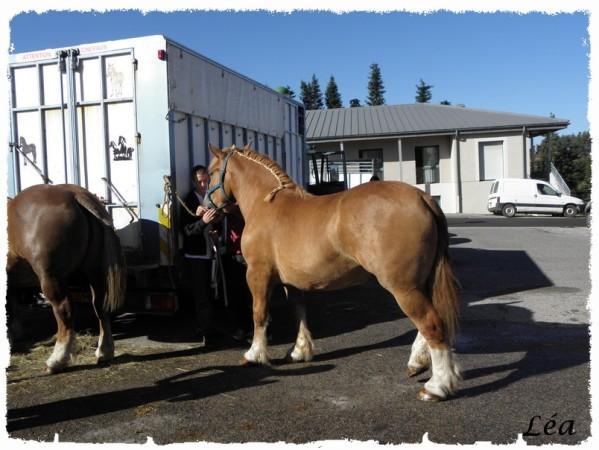 P8213378 chevaux