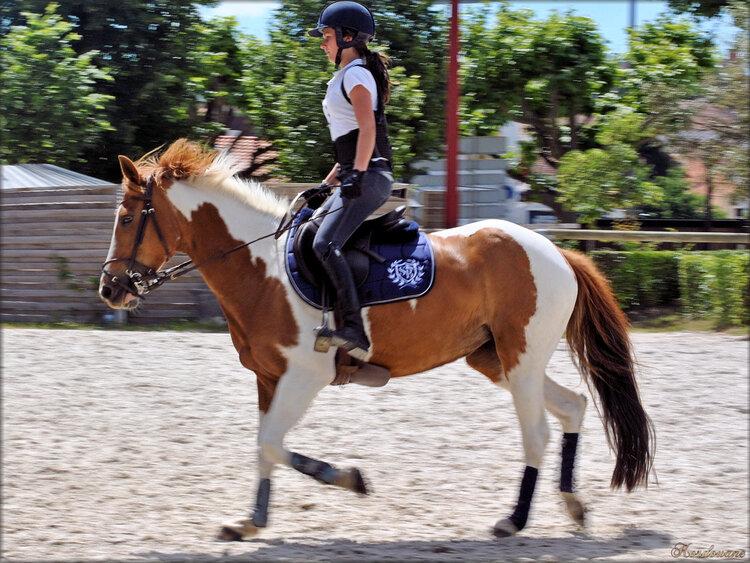 Photos école d'équitation (Haras de Vendée)