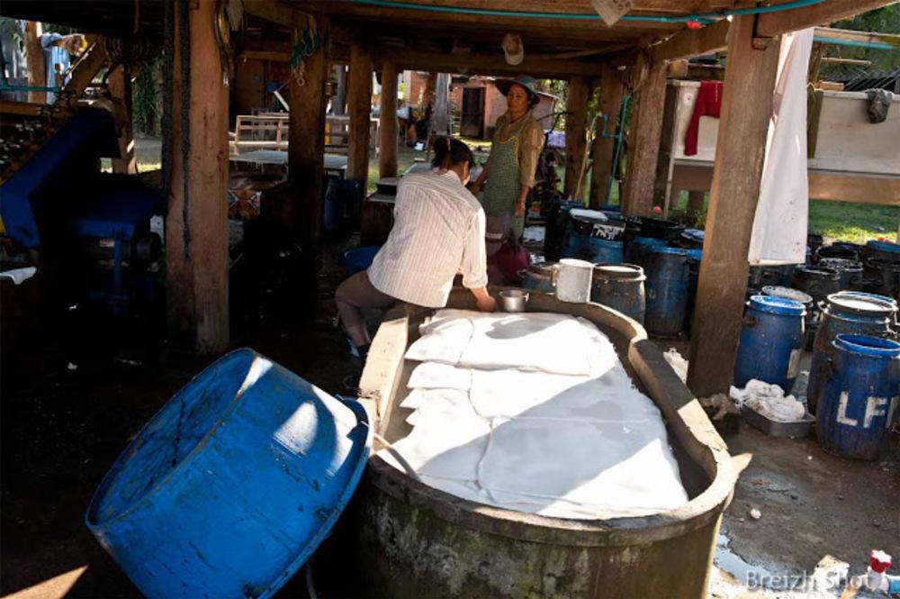 Lavage des coagulum d'Hévéa - Luang Namtha