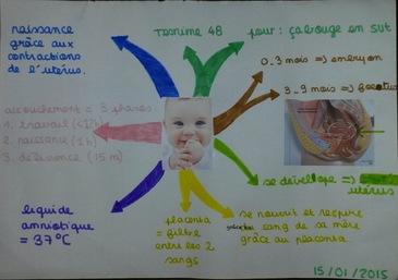 carte mentale 4ème bébé svt
