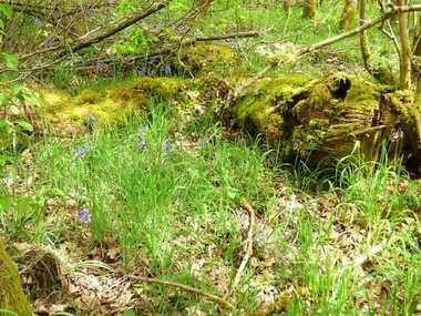 La Forêt de Senonches
