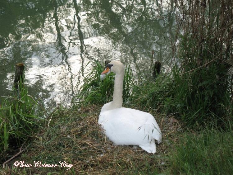 Kunheim : Au bord du canal