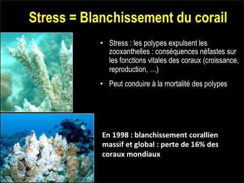 Blanchissement corallien