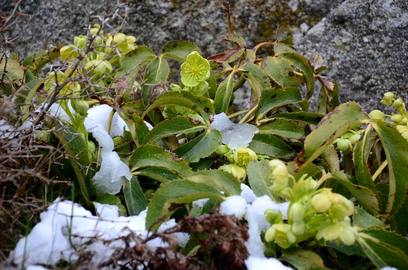 cuscionu corse schnoebelen