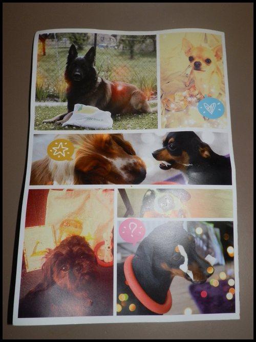 "Box# Doggybox "" Spéciale rentrée - Août 2014"