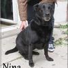 Nina XB 1