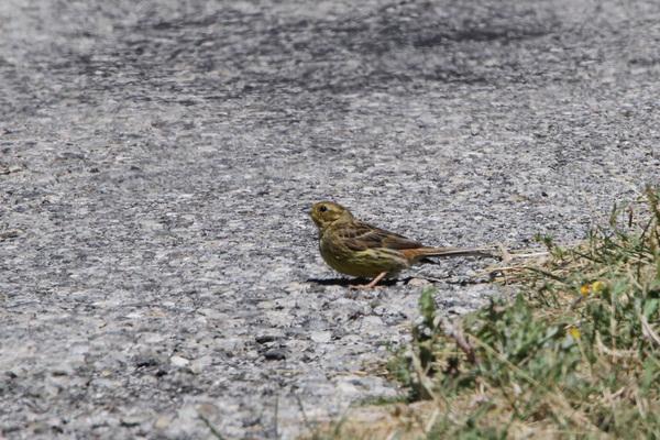 Quelques oiseaux au hameau de Glaise