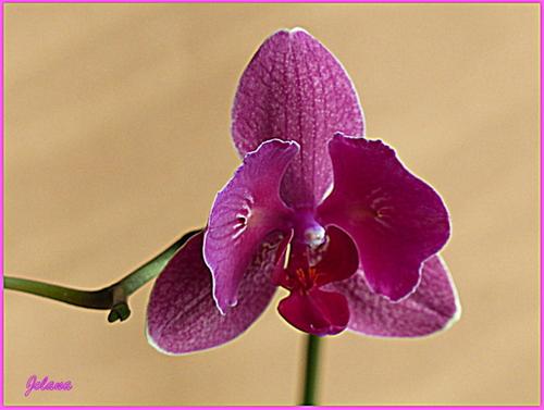 Mon orchidée 2014 ! hdr