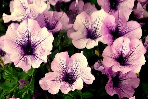 Encore de jolies fleurs !