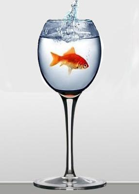 Saviez-vous pourquoi le vin rouge n'accompagne pas bien le poisson?