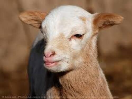 Défi n° 203 : BB animaux de la ferme