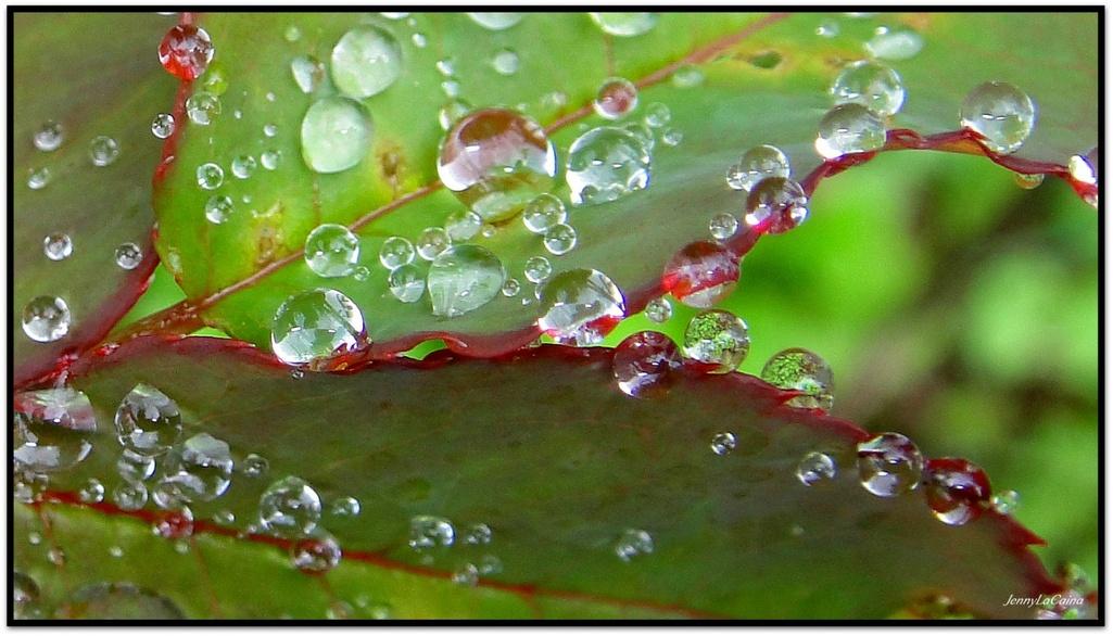 Perles de pluie