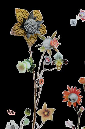 Tubes : Fleurs sèches