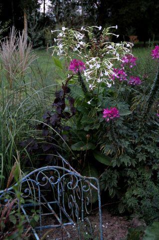 Giardini e vivai:  un bel programma ! (1/2)