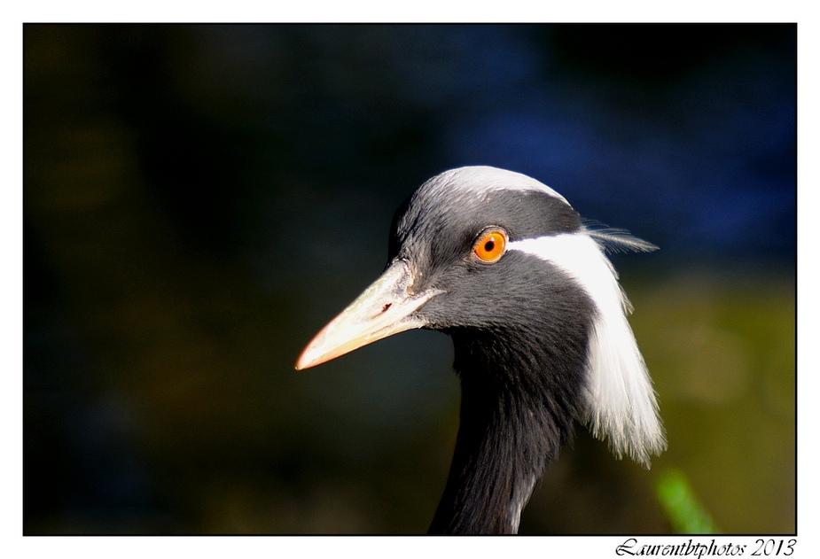 Zoo de Beauval, encore des oiseaux...