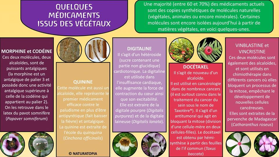 Médocs quelques issus des végétaux