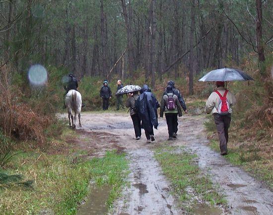 Amazone sous la pluie