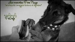 PetSafe, créez vos meilleurs moments avec Pitou