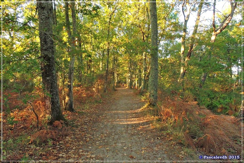 Automne au parc de la Chêneraie à la Hume - Octobre 2015 - 5/7