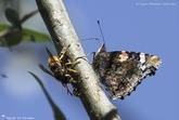 Insectes en groupe