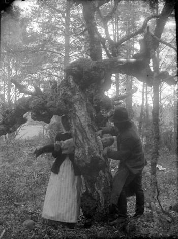 Les arbres des légendes ...