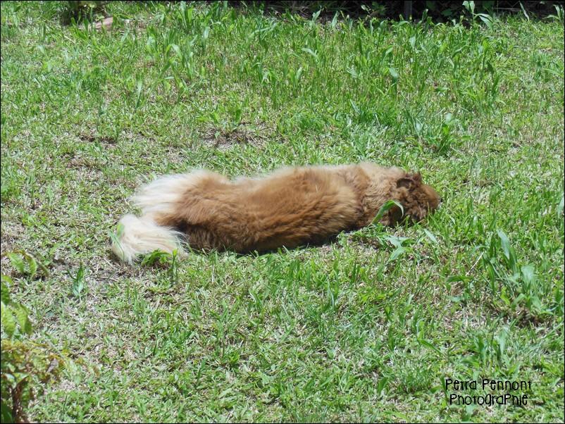 Kanel prend son bain de soleil