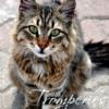 Tromperies