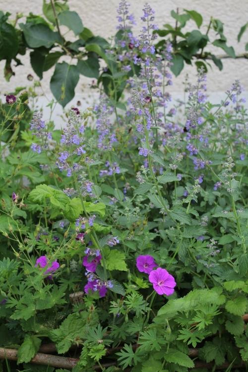 Images du jardin