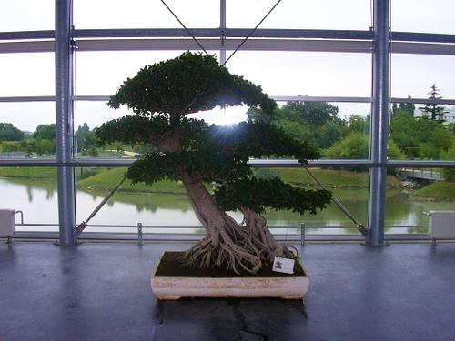 I-Jardin-du-monde--bonsa---19-06-06.jpg