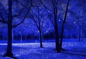 Hidden hints - Nocturnal
